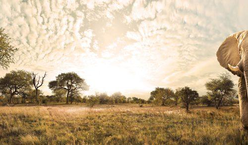 Südafrika pur: Amarula als Brand of the Year ausgezeichnet